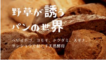 【野草酵母】ヘビイチゴ、ヨモギ、ドクダミ、スギナ、サンショウで作る雑草パン!